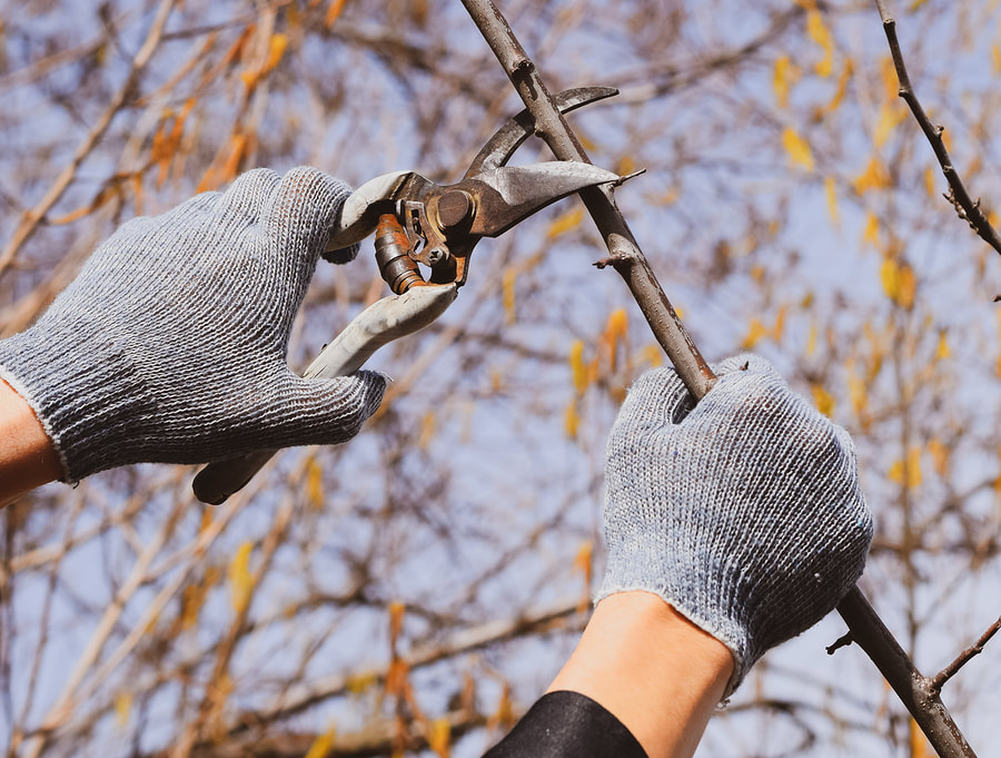 best local tree care services
